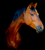 EQULTRASOUND: equine ultrasound therapy