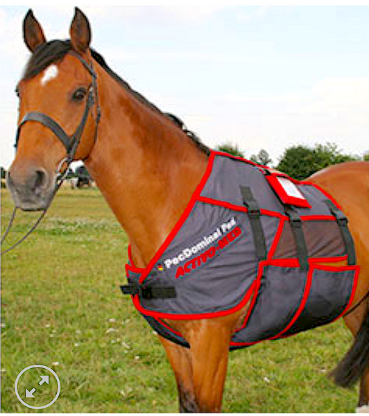 FMBS THERAPY SYSTEMS-UK: providing leading technical products for horses