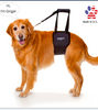 GINGERLEAD: support sling for old or injured pets