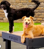 GYMS FOR DOGS: highest quality dog exercise and park products