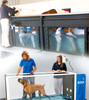 HUDSON AQUATICS: water treadmills and pools for canines and equines