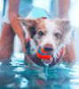 HYDROPHYSIO-UK: market leaders in canine treadmills and pools