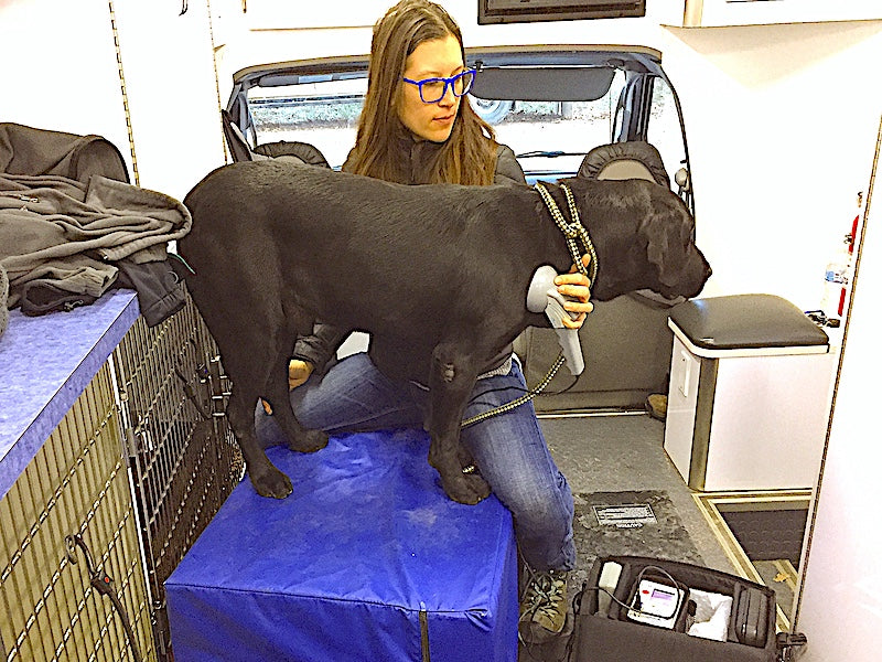 VETERINARIAN WITH A WHOLE(ISTIC) APPROACH TO MOBILITY CARE
