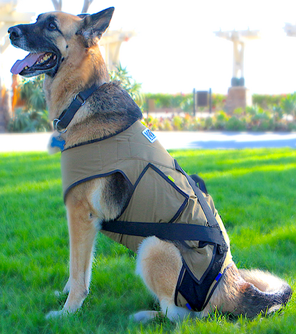 K9 ALIGN: body garment to help stabilize hips and improve mobility