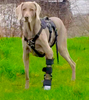 K9 ORTHOTICS & PROSTHETICS-CANADA: the finest custom orthotics and prothetics for your pet