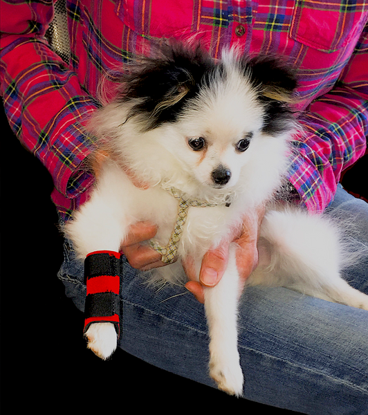 THERAPAW CARPO-FLEX SPORTS WRAP MINI: light support for the front leg of small pets