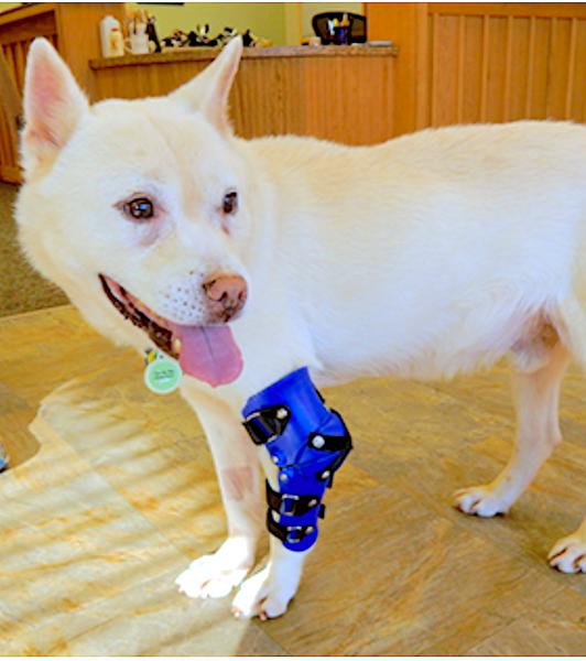 MY PET'S BRACE: custom leg orthotics and prosthetics to help pets walk again