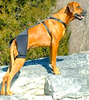 ORTHO DOG HIP & KNEE BRACES: non-rigid neoprene supports for knees and hips