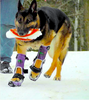ORTHOPETS: custom-made orthotics and prosthetics for your pet