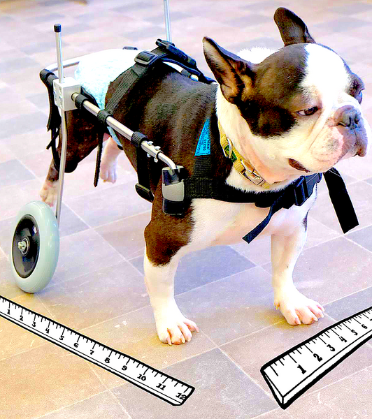 PFAFF ROLLWAGEN-GERMANY: the next generation of wheelchairs for dogs