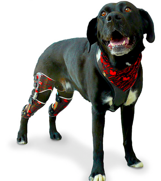 PAWSABILITY-CANADA: custom orthotics and braces for any part of the body