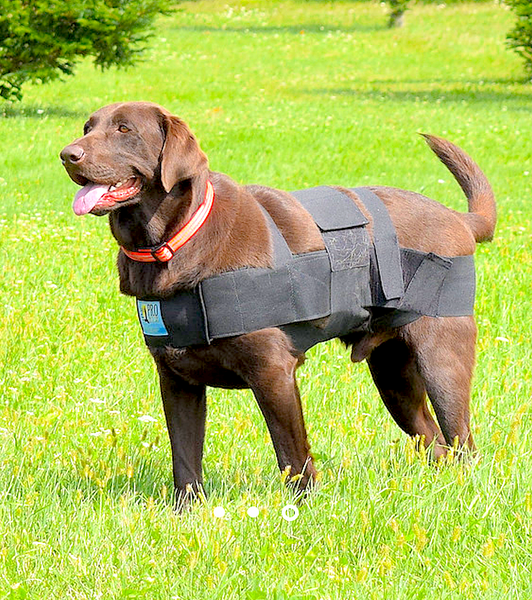 PRO SIX CANINE: body wrap used to improve body awareness and balance