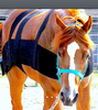 PRO SIX EQUINE: body wrap used to improve body awareness and balance