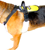PULLING AND BALANCE HARNESS: with stand-up handle and multi-d-ring attachments