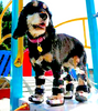 RED DOG BRACES-AUS & NZ Customers: Thera-Paw Wraps, Braces, and Other Orthotics in NZ and AUS