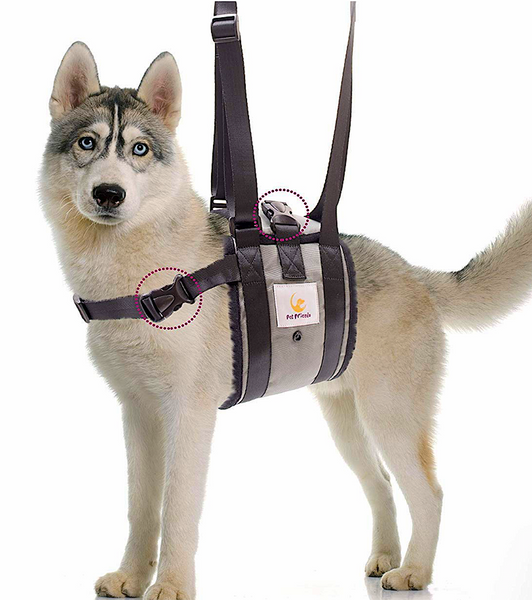 VETERINARIAN-APPROVED SUPPORT SLING: with adjustable straps for disabled and painful dogs