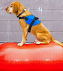 FITPAWS SAFETY HARNESS: 3x Small - Medium