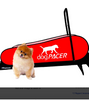 DOGPACER MINI: the best dog treadmill on the market!