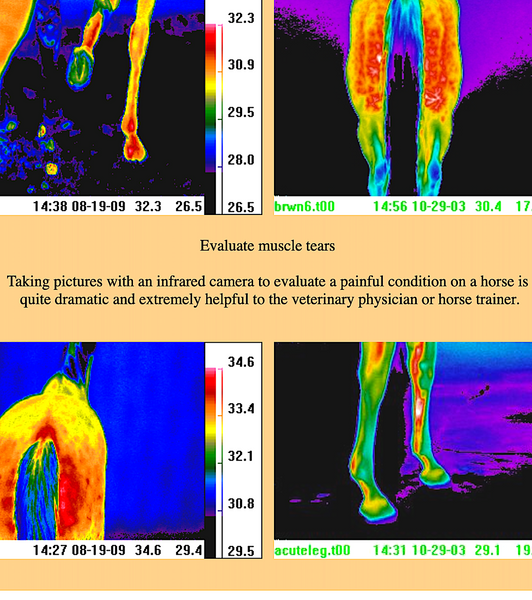 THERMOLOGY: veterinary applications with teletherm infrared