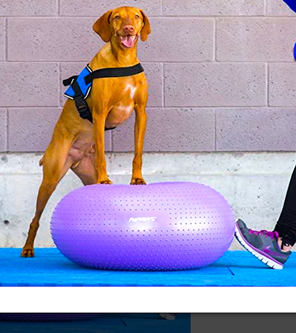 FITPAWS TRAXDONUT: for improved body awareness and balance