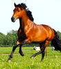FOCUS-IT: ESWT for acute and chronic equine injuries and lameness