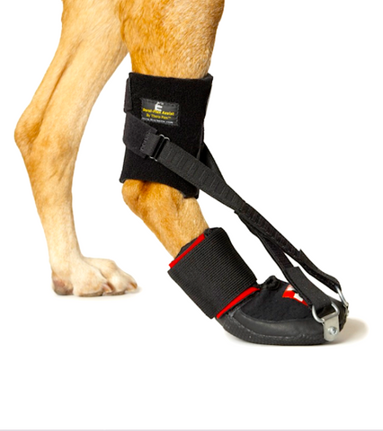 THERAPAW HINDLIMB DORSI-FLEX ASSIST: reduces knuckling + helps flex the ankle
