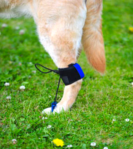 SCIATIC NERVE TOE UP: toe sling for dogs with paw and ankle weakness