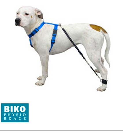 BIKO RESISTANCE BANDS: elastic bands that help to bring back legs forward in weak dogs