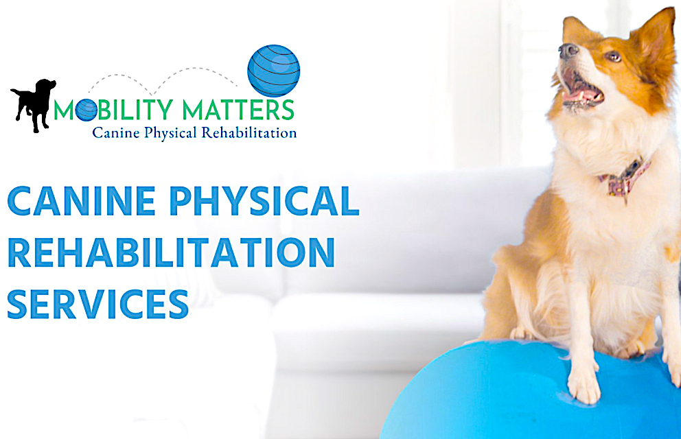VETERINARIAN - MOBILITY SPECIALIST FOR ATHLETES & FAMILY PETS