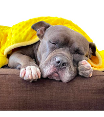 PAWFECT ANTI-ANXIETY WEIGHTED PET BLANKET: helps reduce stress and anxiety in your pet