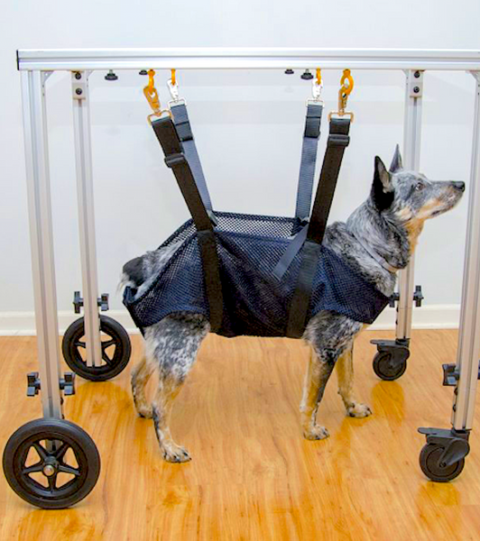 CANINE REHAB SYSTEMS SLING & ROLLING / STANDING FRAME: for dogs with very limited mobility