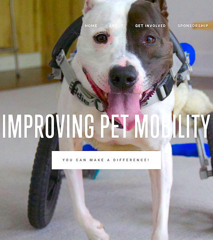 BIALY'S WELLNESS FOUNDATION: helps families and rescues care for pets with mobility impairments