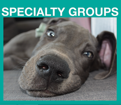 SPECIALTY GROUPS: billboard ad