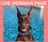 LIVE WEBINAR EDUCATION PAGE - large rectangle sidebar ad