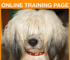 ONLINE TRAINING PAGE: large rectangle, sidebar ad