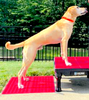 SUPERFIT CANINE: rehab and fitness equipment for your patient and pet