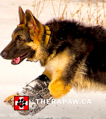 THERAPAW-CANADA: custom and standard wrist and ankle braces for injuries, pain, deviations