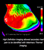 VETERINARY THERMAL IMAGING-UK: valuable addition to your diagnostic toolbox