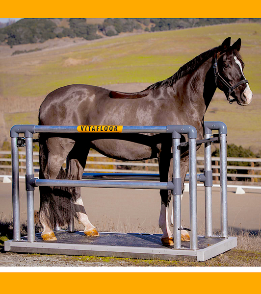 VITAFLOOR VIBRATION PLATFORM: the original inventors of equine vibration therapy
