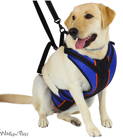 WALKIN' PETS HARNESSES & SLINGS: help your pets regain mobility and independence