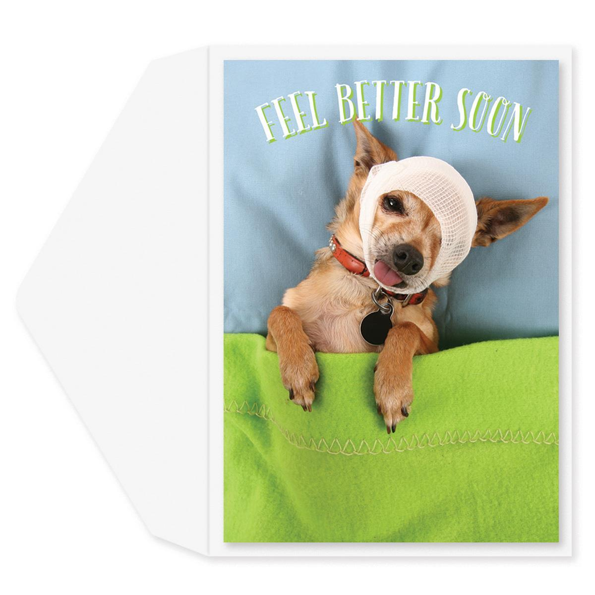 Chihuahua Get Well Card