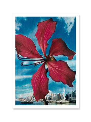 Postcard – Bauhinia, in front of Hong Kong Harbour