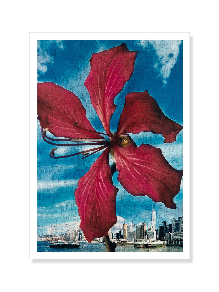 Holly Lee - 'Bauhinia, in front of Hong Kong Harbour' postcard | M+ Shop | M+ Collections | Hong Kong Artist
