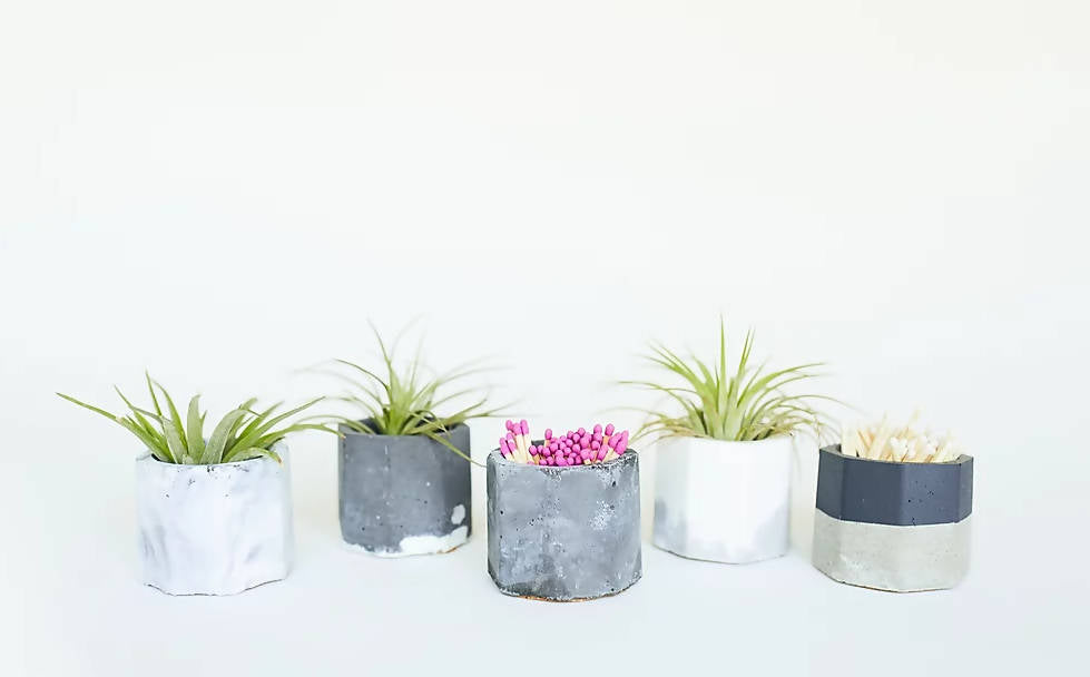 Concrete Vessel with Air Plant