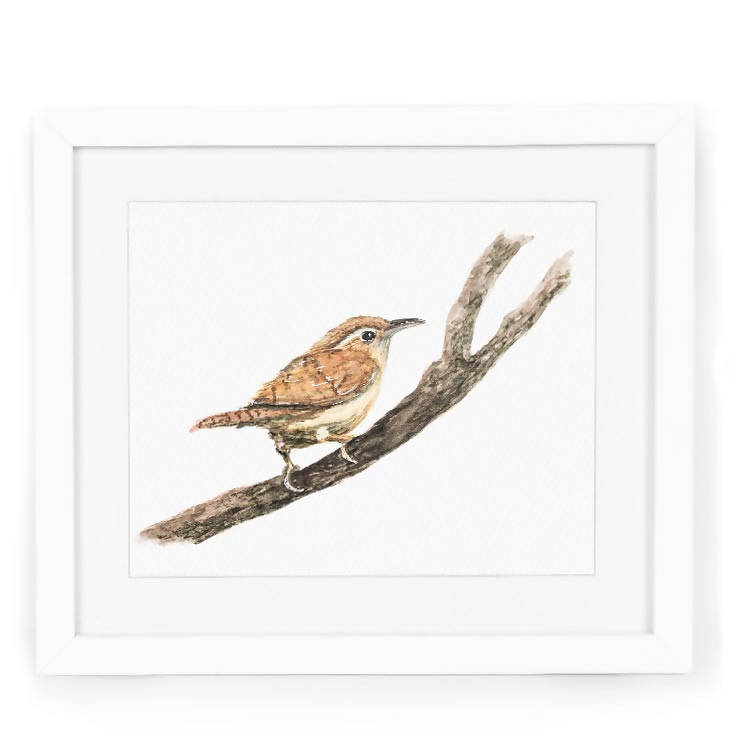 Male Wren Watercolor Art Print