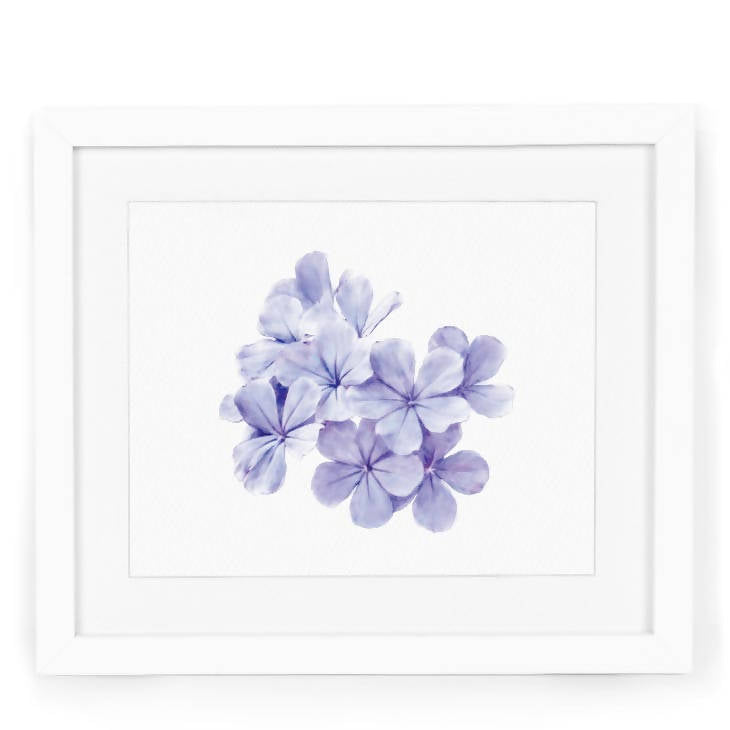 Plumbago Watercolor Art Print