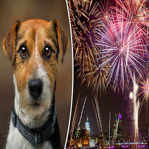 Dogs and Fireworks Top 10 Tips