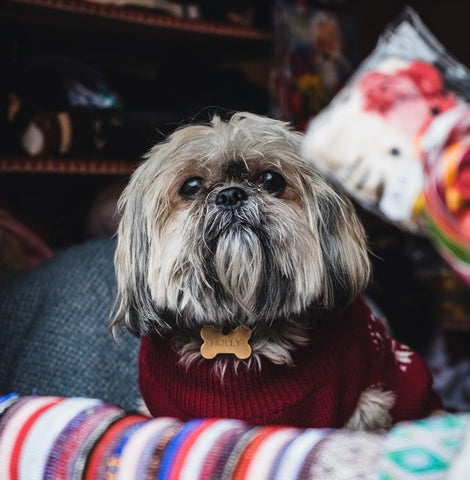 wiser pet christmas sale natural pet products