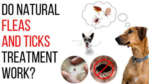 do natural flea and tick treatments work