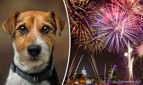 Fireworks and dogs - ten tips to keep dogs calm image